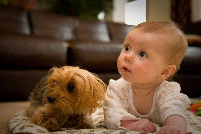 Top 10 Kids-Friendly Dog #1 is the bulldog!!