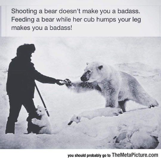 ... Mmm you really shouldn't feed bears.  It actually puts them In danger... However that being said the polar bears are starving and I'm not in to hunting!