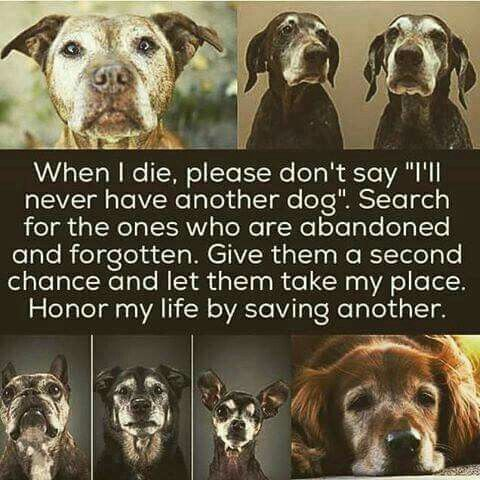 WHEN MY 4 ANCIENTS, 22 YRS, 21 YRS, AND 2 X 19 OLDS PASS I WILL DEFINITELY ONLY ADOPT OLDIES. THEY HAVE SO MUCH LOVE TO GIVE. For the love of dogs ❤