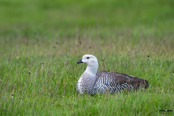 8 Cool Goose Facts. - Random Facts