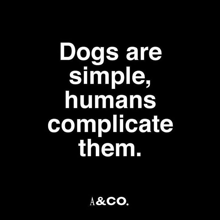 #albandco #albandcoquotes #quotes #dogquote #training #dogtraining #patience #dog #dogs #perro #perros #adiestramiento #instagramers #instagood #doggie #puppy
