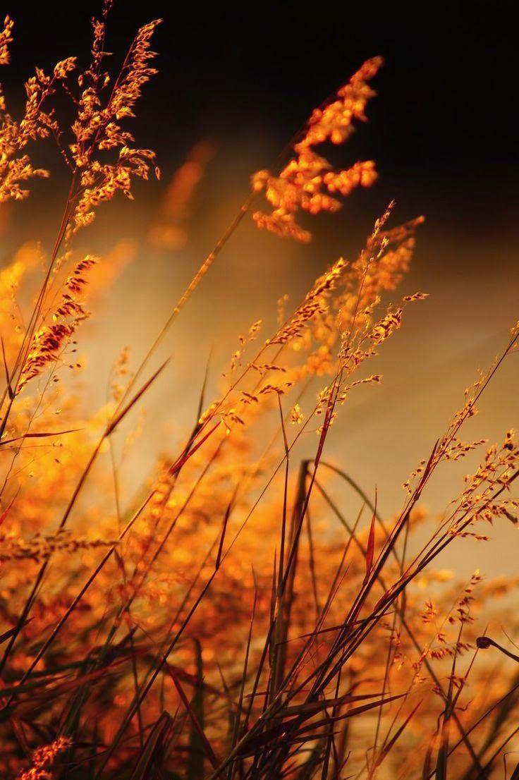 ภาพสวย ว ว ธรรมชาต ดอกไม สวยมาก Live Fall Pictures Nature Photography Autumn Photography