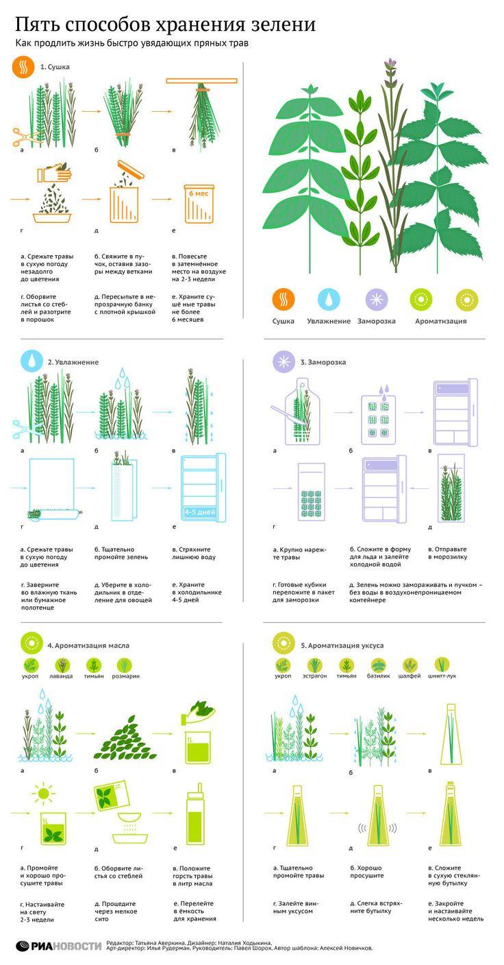 Пять способов сохранить зелень