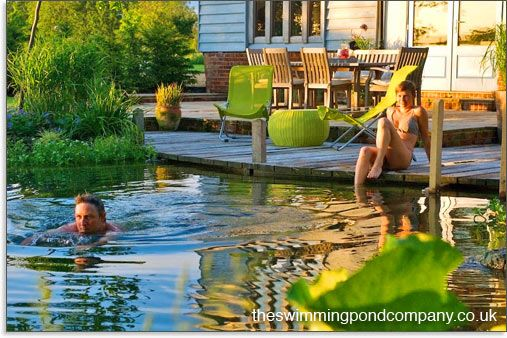 Convert A Swimming Pool Into A Swimming Pond The Swimming Pond Company Water Gardens