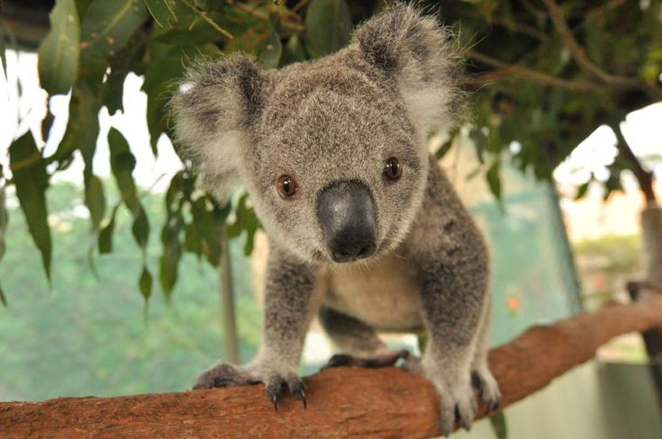 Park Art|My WordPress Blog_How Long Will I Live Quiz Australia