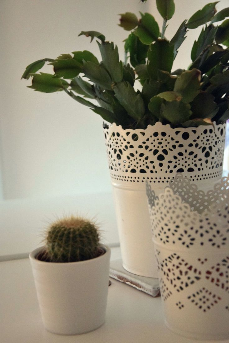 Cactus in my bedroom. #cactus #simple #decoration #diy #bedroom