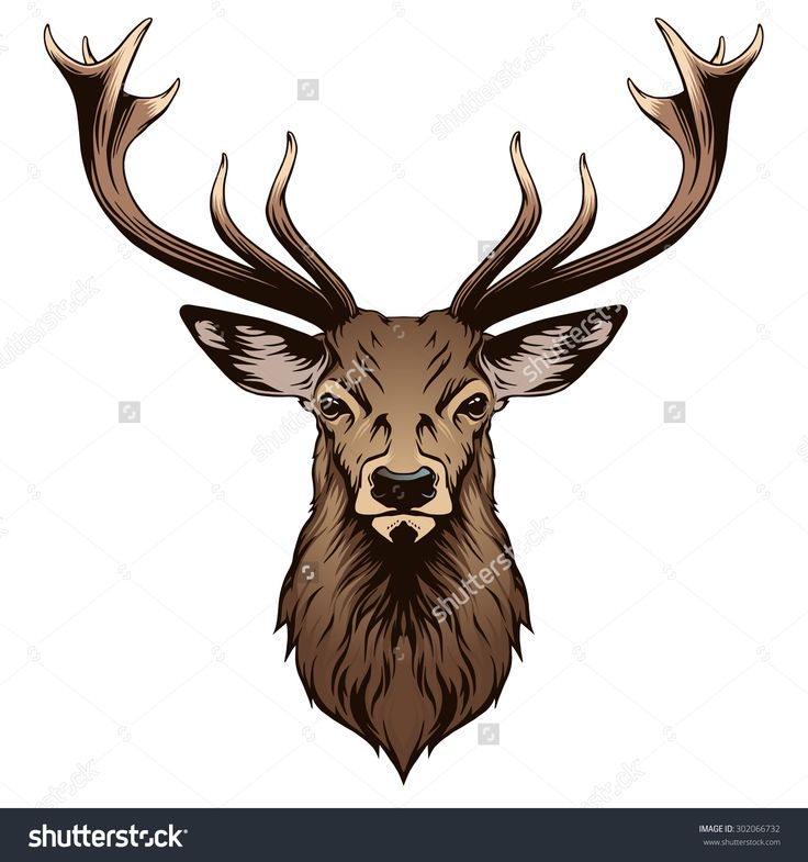 1000+ images about Deerly on Pinterest | A deer, Deer eyes ...