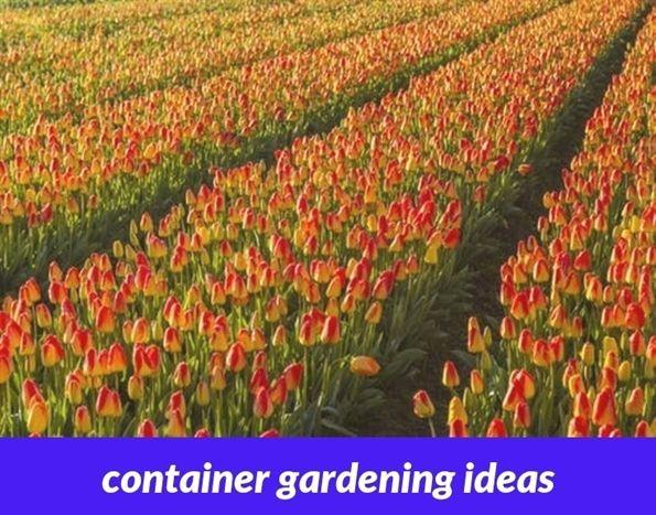 Container Gardening Ideas 29 20181126052254 53 Indoor Garden