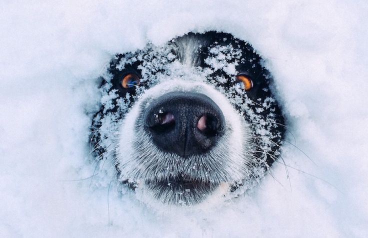 30 photos of animals enjoying snow more than you do - The noses that defied cold! #Animals #cute #snow #Blizzard #snowzilla