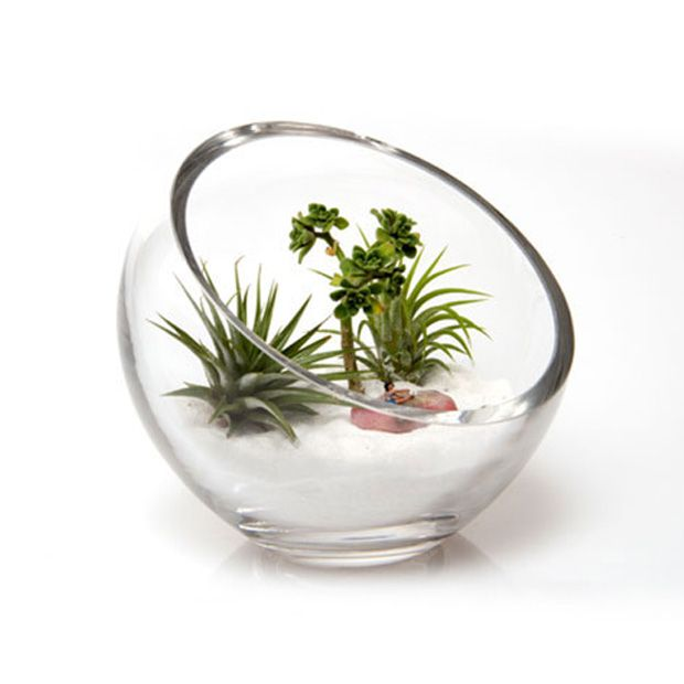 Lost World Terrarium Bowl | dotandbo.com - 25+ Best Terrarium Bowls Ideas On Pinterest Dish Garden, Plants