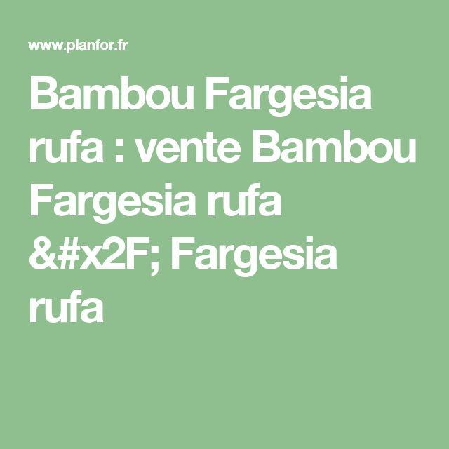 Bambou Fargesia rufa : vente Bambou Fargesia rufa / Fargesia rufa