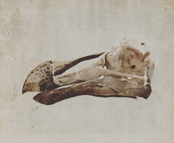 72 best D Is For Dodo images on Pinterest | Birds, Carving ...