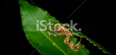Spider hiding behind a leaf in the forest Royalty Free Stock Photo