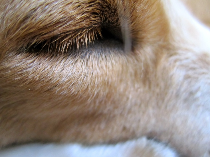 Eyelashes Other Dogs and Cats Pinterest Ps, Pets and