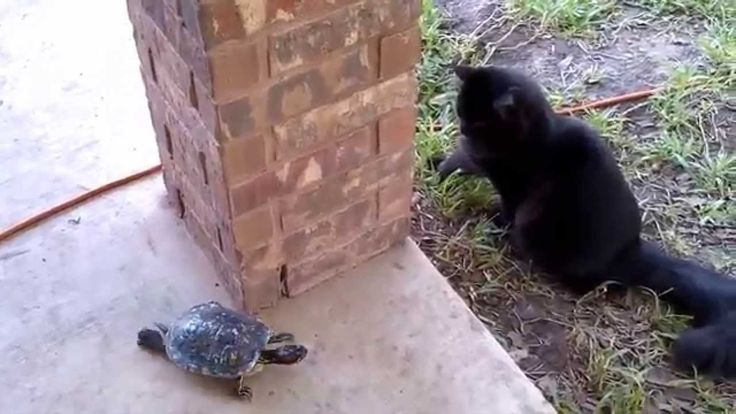 Cat and turtle playing you are it! #Cat #Turtle #Positivesaurus #Cute #video www.positivethesaurus.com