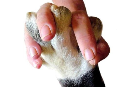 93 best images about Paws and Hands on Pinterest | Pets ...
