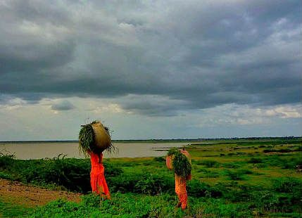 Monsoon rains in Peninsular and Central India revive Kharif crops -