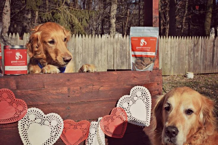 Submit or tag a photo with #MyDogValentine to be entered to win a Good Reasons Dog Treats Prize Pack! Entry with the most votes on Valentines Day will win!