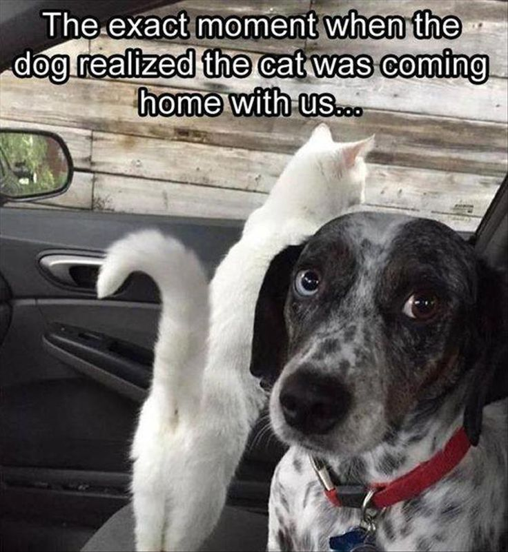 Funny Animal Pictures Of The Day - 47 Pics