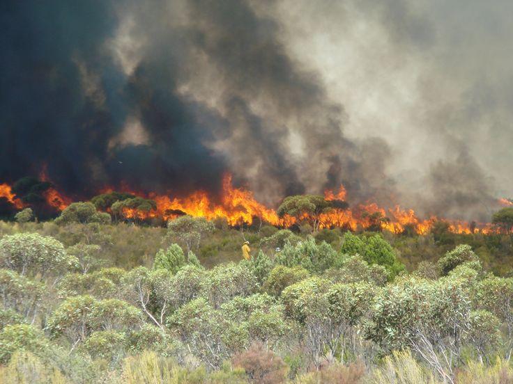 Blazing a trail for tracking bushfires