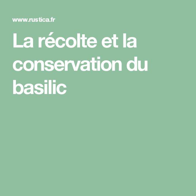 La récolte et la conservation du basilic