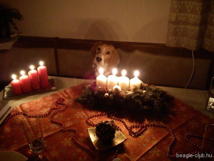 Karácsonyi vacsora, @kinga82