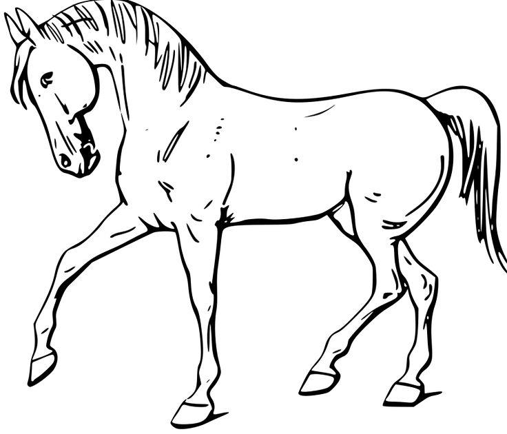 desenho cavalo andando
