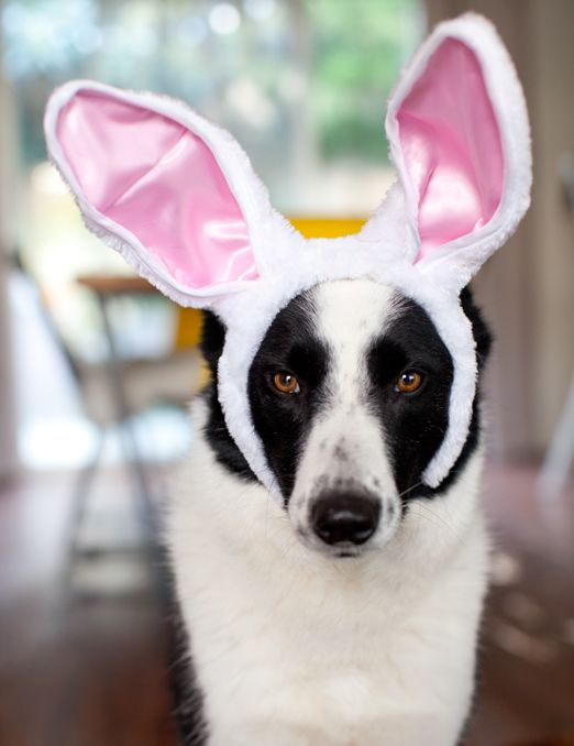 30 best hoppy easter easter ideas for dogs images on pinterest happy fing easter a house in the hills negle Images