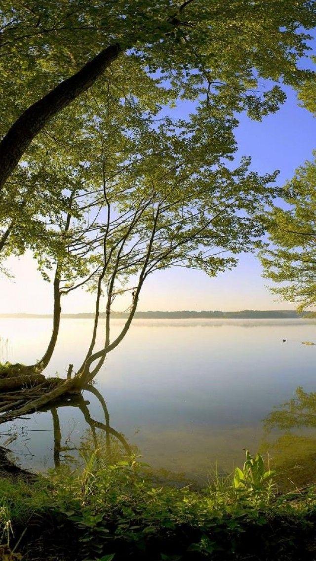 Forest, Lake, Green, Landscape, Nature