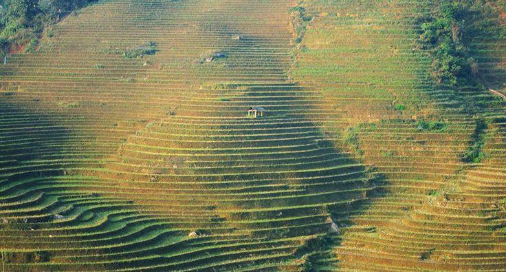 Rice terraces in Thanh Kim village - Sapa, Vietnam. #sapa #thanhkim #village #reddao #ethnic #minority #vietnam #travel #wandering