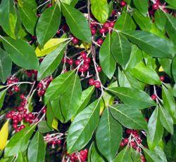 Burnt Ridge Nursery- tons of plants- nut trees, fruit trees/shrubs/bushes, natives, etc.