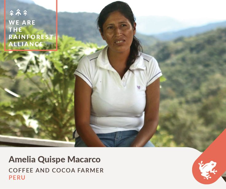Amelia Quispe Macarco grows coffee and cocoa on her Rainforest Alliance Certified farm in Peru. Learn more about Amelia, and meet other members of our alliance in our new video!