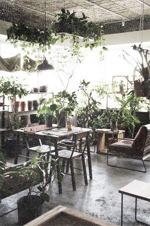 事例 ハチグリーン【HACHI GREEN】名古屋の個性的な観葉植物とガーデンデザイン