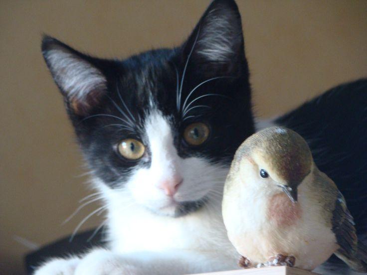 Le chat et l'oiseau ;)
