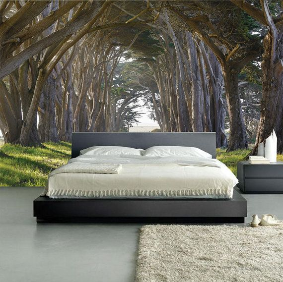 wall murals bedroom tree wall murals forest wallpaper wallpaper murals. Black Bedroom Furniture Sets. Home Design Ideas