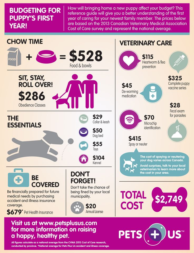 How to plan for puppy's first year, dog food, dog obedience, veterinary care, puppy play time