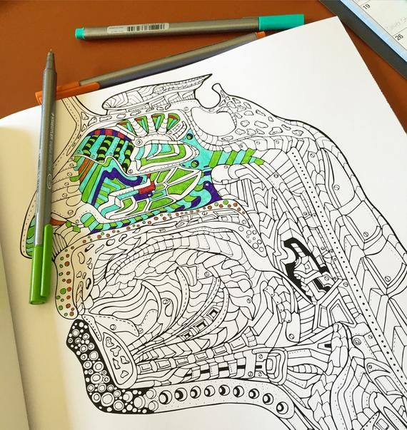 Show Me Your Guts An Artistic Anatomical Coloring Book For Etsy Coloring Books Create This Book Anatomical