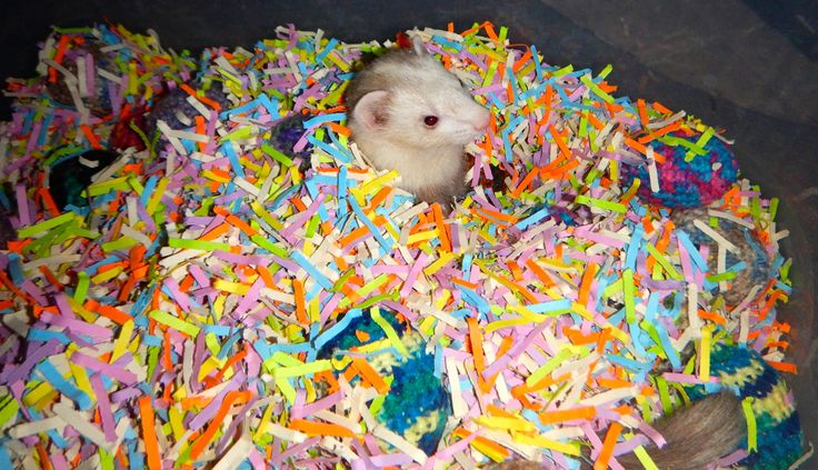 Colorful #ferret Dig Box made out of shredded paper