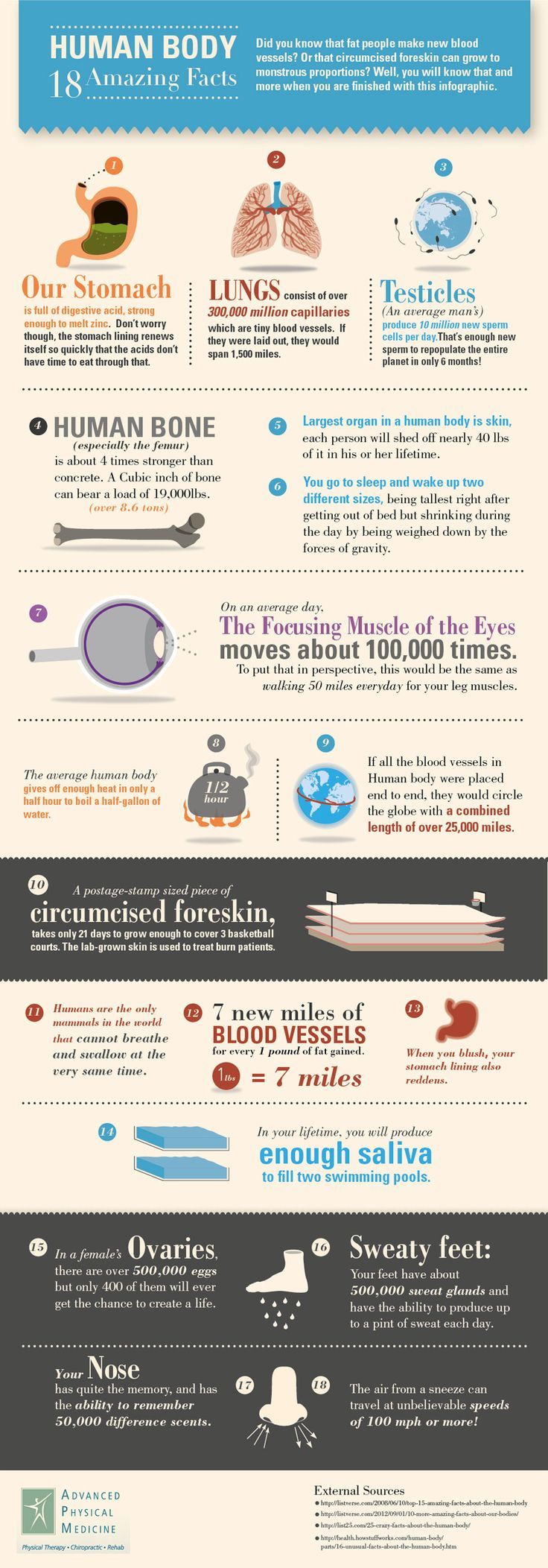 Human Body: 18 Amazing Facts[INFOGRAPHIC]