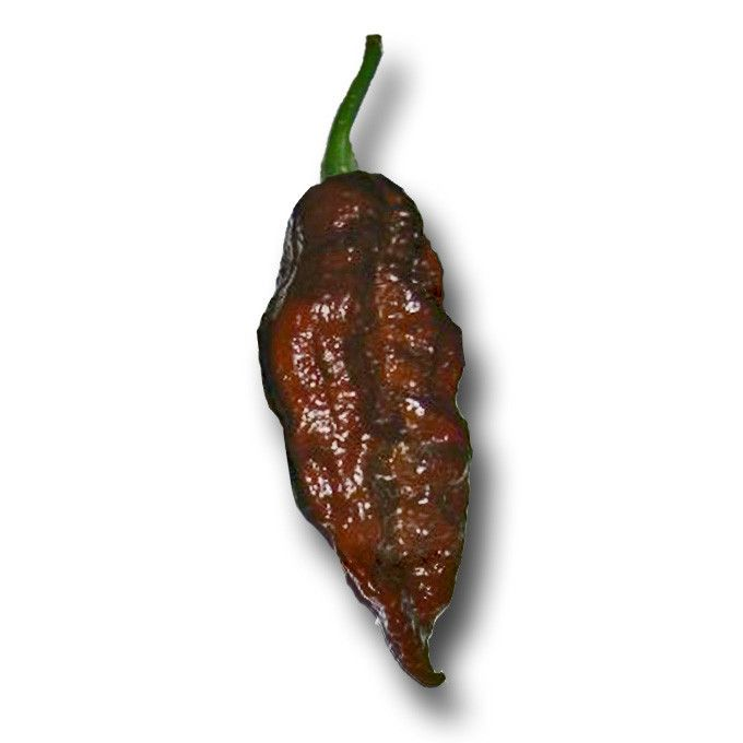 I may have to try this Chocolate Bhut Jolokia Ghost Pepper in the garden next spring! I'll buy my seeds from: http://www.sandiaseed.com/collections/hottest-pepper-seeds/products/chocolate-bhut-jolokia-ghost-pepper-chile-seeds