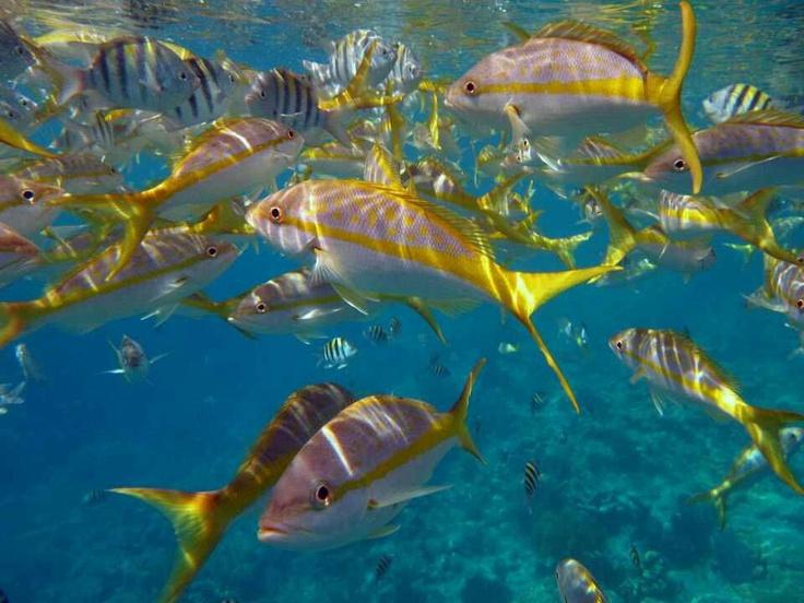 169 best aquariums images on pinterest aquariums fish for Florida tropical fish