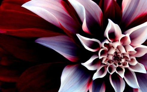 most beautiful flowers in the world - Google Search