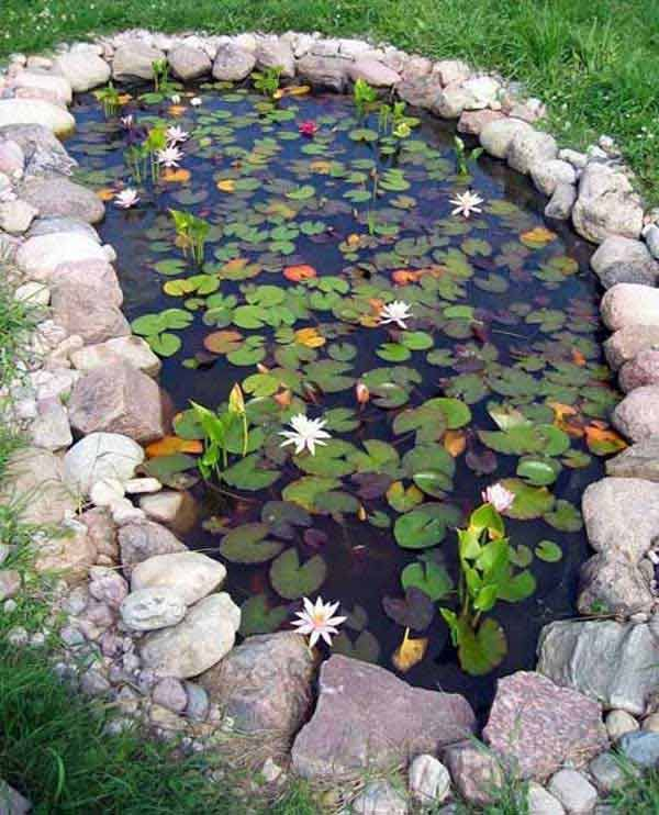 Water lily's are beautiful in a fish pond and provide protection for the fish.