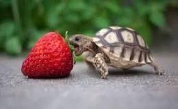 https://www.quecome.com/que-comen-las-tortugas/