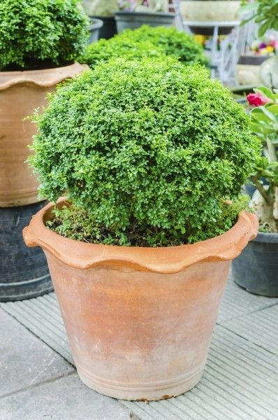 144 Best Images About Container Plants And Gardens On 640 x 480