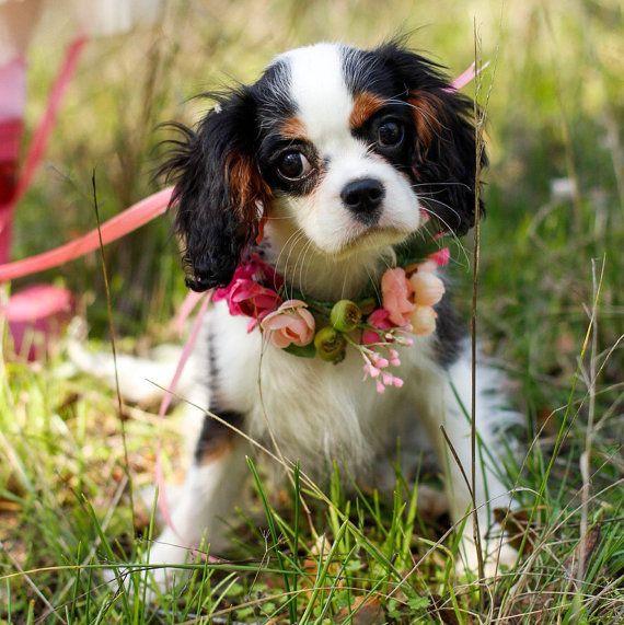 Dog flower crown/necklace