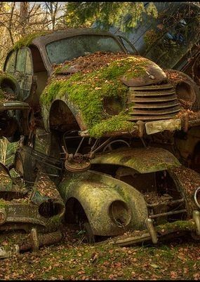 Mossy abandoned cars.