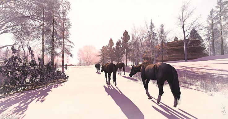 Jacobs Pond - Horses | Flickr - Photo Sharing!