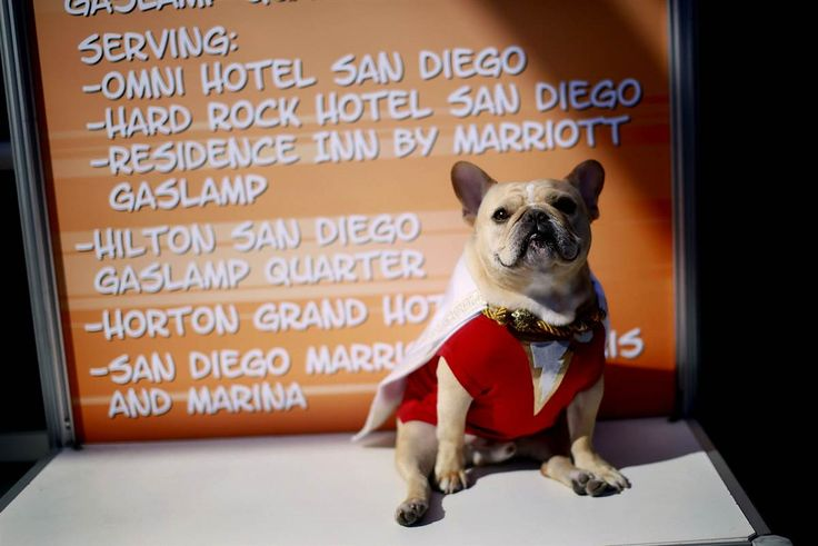 """Ollie the French Bulldog, dressed in a """"Shazam"""" costume, sits outside of the San Diego Convention Center during the 2014 Comic-Con International Convention in San Diego, California, on July 24."""