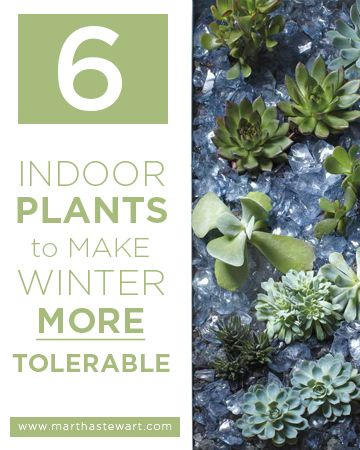 1000 images about gardening tips ideas on pinterest for Indoor gardening for seniors
